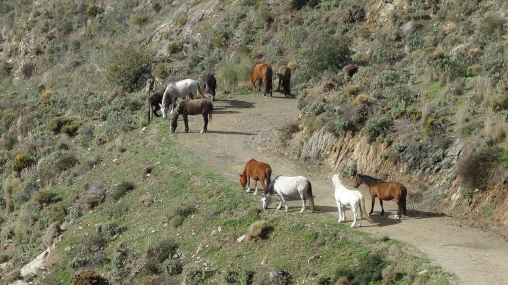 Wildpferde, Sedella, Naturpark